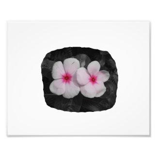 Pinwheel pink circle  flower cutout photographic print