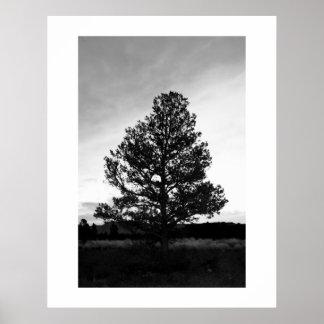 Pinyon Tree Silhouette Poster