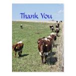 Pinzgauer Cattle 8371 Postcard- customise