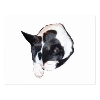 Piper - Sleeping Postcard