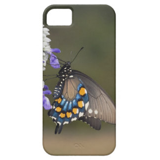 Pipevine Swallowtail, Battus philenor, adult Case For The iPhone 5