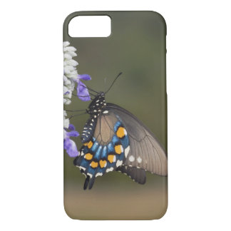 Pipevine Swallowtail, Battus philenor, adult iPhone 7 Case