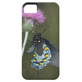 Pipevine Swallowtail, Battus philenor, adult on iPhone 5 Covers