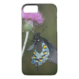 Pipevine Swallowtail, Battus philenor, adult on iPhone 7 Case