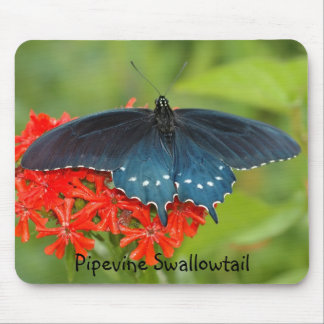 Pipevine Swallowtail Mouse Mat