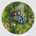pipevine swallowtail sticker