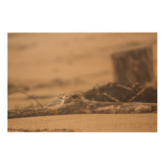 "Piping Plover 36""x24"" Wood Wall Art"