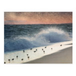 Piping Plovers and Peach and Blue Sunset Postcard