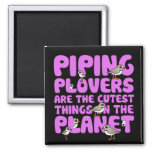 Piping Plovers are the Cutest Things on the Planet Square Magnet