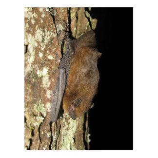 Pipistrelle bat postcard