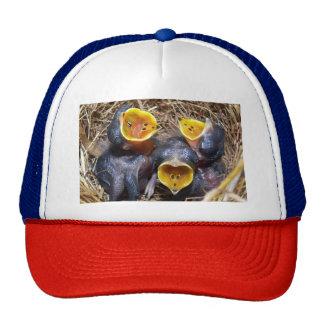 Pippit-closer and Australasian Pipit Cap