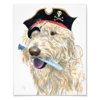Pirate Cream Labradoodle Photo