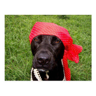 Pirate dog black lab red hankerchief green grass post card