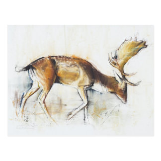 Pisanello Buck 2006 Postcard