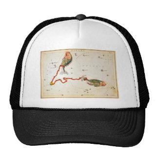 Pisces Mesh Hat