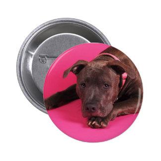 Pit Bull on Pink 6 Cm Round Badge