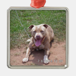 Pit Bull Products Christmas Ornament