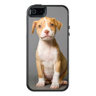 Pit-Bull Puppy OtterBox iPhone 5/5s/SE Case