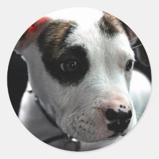 Pit Bull Puppy Round Sticker
