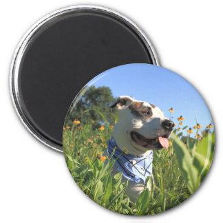 Pit Bull T-Bone 6 Cm Round Magnet