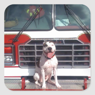 Pit Bull T-Bone Fire House Dog Square Sticker