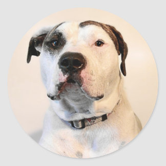 Pit Bull T-Bone Round Sticker