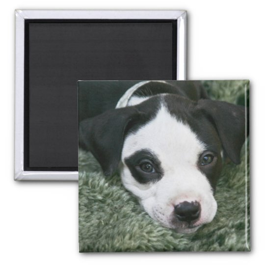 "Pit Bull Terrier Pup Magnet - ""Angie"""
