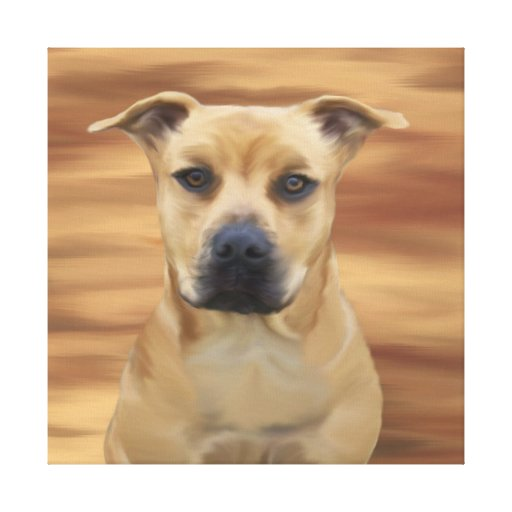 Pit Bull Terrier Simulated Oil Painting Stretched Canvas Prints