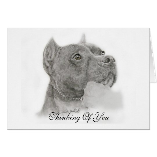 Pit Bull Thinking of You Card