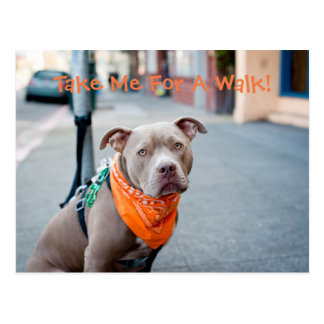 Pit Bull with Scarf Postcard