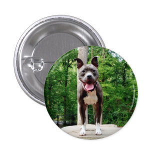 Pit in the Park 3 Cm Round Badge