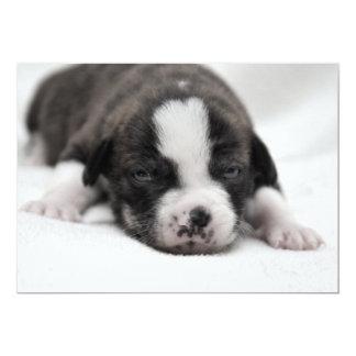 Pit Puppy 2 Invitation
