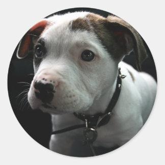 Pit Puppy Stickers