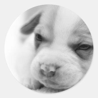Pit Puppy Sticker