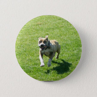 Pitbull button