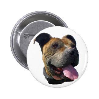 Pitbull button