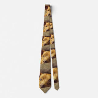 Pitbull/Dachshund Dog Tie in color