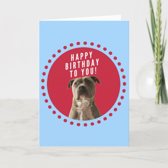 Pitbull Dog Happy Birthday Blue Greeting Card