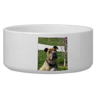 Pitbull dog pet bowls
