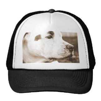 pitbull dog sepia color hate deed not breed cap
