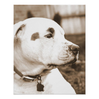 pitbull dog sepia hate deed not breed poster