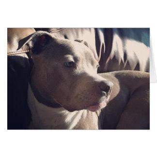 Pitbull = Handsome Card