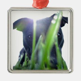 Pitbull in the Grass Silver-Colored Square Decoration