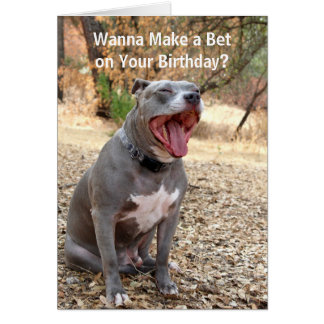 Pitbull Make a Bet Birthday Card