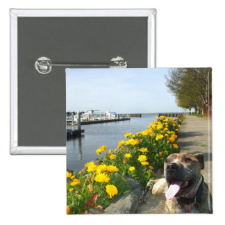 Pitbull on a Spring day button