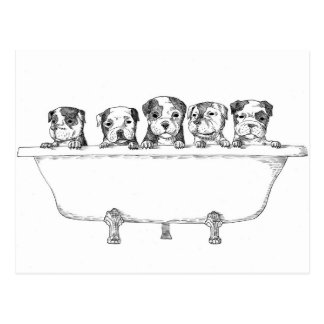 Pitbull Puppies In the Tub - Illustration Postcard