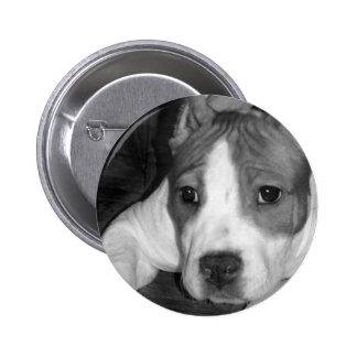 Pitbull puppy button