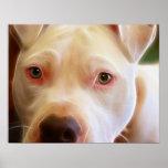 Pitbull Puppy Dog Eyes Art Photography Poster