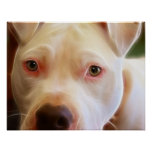 Pitbull Puppy Dog Eyes Art Photography Print