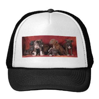 Pitbull puppy heaven mesh hat